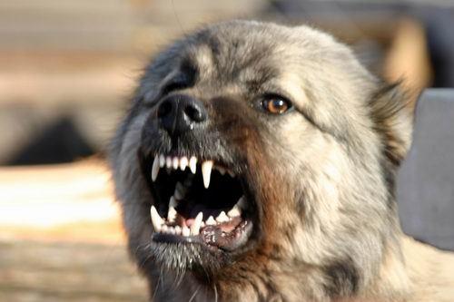 Злая собака - власть Александрии