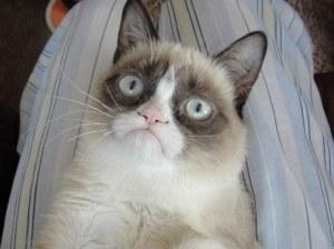 Унылый кот